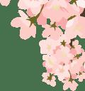 SoftBank 光 新生活応援! キャッシュバック / 割引キャンペーン